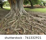 sacred fig tree  ficus... | Shutterstock . vector #761332921