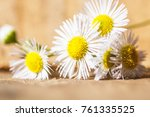 medicable herb chamomile tea... | Shutterstock . vector #761335525