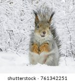 squirrel in the snow forest.... | Shutterstock . vector #761342251