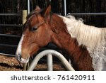 paint colt standing in the dry... | Shutterstock . vector #761420911