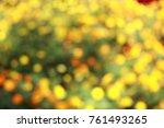 marigold yellow or orange color ... | Shutterstock . vector #761493265