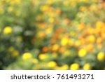 marigold yellow or orange color ... | Shutterstock . vector #761493271