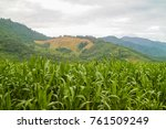 corn farm in the middle of... | Shutterstock . vector #761509249