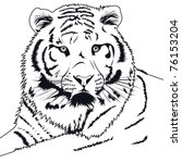 tiger | Shutterstock .eps vector #76153204