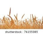 rye. rye on a white background. ... | Shutterstock . vector #76155385