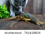 The Large Crayfish Retreats On...
