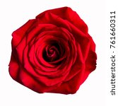 Stock photo red rose flower close up isolated on the white background 761660311