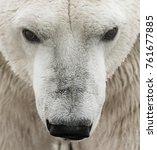 big polar bear fishing during... | Shutterstock . vector #761677885