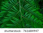 trees and plants in the... | Shutterstock . vector #761684947