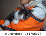 stray cat in a shelter | Shutterstock . vector #761708317