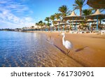 beautiful white heron stands on ... | Shutterstock . vector #761730901