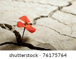 Red Flower Growing Out Of...