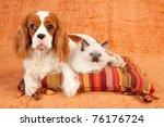 Stock photo cavalier puppy and ragdoll kitten 76176724