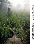 Small photo of Elephants stride through the jungle and mist in Chitwan National Park, Nepal