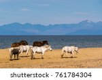 a herd of horses grazing on the ... | Shutterstock . vector #761784304