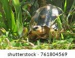 the radiated tortoise from... | Shutterstock . vector #761804569