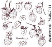 strawberry vector illustration. ...   Shutterstock .eps vector #761817481
