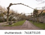 Small photo of view of a park with some trees without leaves that entangle their branches from one side of the walk to the other
