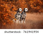 two dalmatian dogs on a walk | Shutterstock . vector #761941954