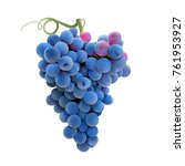 grapes. hand drawn vector... | Shutterstock .eps vector #761953927