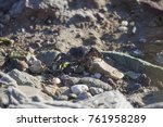 crab near to the beach | Shutterstock . vector #761958289