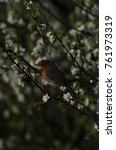 european robin  erithacus... | Shutterstock . vector #761973319