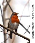 european robin  erithacus... | Shutterstock . vector #761973325