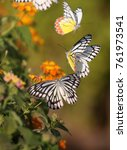Small photo of Delias Eucharis butterfly in Hanging Gardens of Mumbai, India