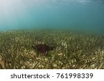 a red bahama sea starfish in... | Shutterstock . vector #761998339