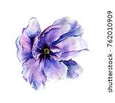 watercolor peonies and pink... | Shutterstock . vector #762010909