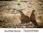 prairie dogs at the sonora... | Shutterstock . vector #762055984