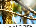 soft chameleon or lizard on... | Shutterstock . vector #762081784