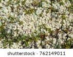 soil covered of white soft... | Shutterstock . vector #762149011