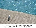 Elegant White Gull Watching Th...