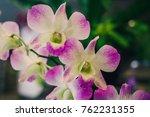 violet orchids or purple pink... | Shutterstock . vector #762231355