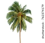 coconut palm tree isolated on... | Shutterstock . vector #762374179