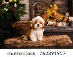 Stock photo happy new year christmas puppy shih tzu holidays and celebration pet in the room the christmas 762391957