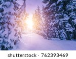 forest pine trees in winter... | Shutterstock . vector #762393469