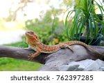 very beautiful orange chameleon ... | Shutterstock . vector #762397285