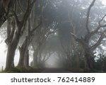 misty morning at the dark hedges | Shutterstock . vector #762414889
