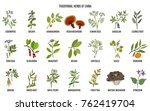 chinese traditional medicinal... | Shutterstock .eps vector #762419704