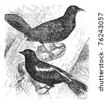 Bobolink Also Known As ...