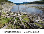 damage made by beavers and... | Shutterstock . vector #762431215