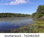 wildlife pond on cape cod | Shutterstock . vector #762482365