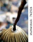 missouri botanical gardens...   Shutterstock . vector #762526