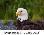 bald eagle dutch harbor | Shutterstock . vector #762532015