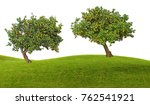orange trees on white background | Shutterstock . vector #762541921