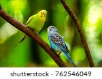 beautiful budgerigar bird... | Shutterstock . vector #762546049