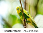beautiful budgerigar bird... | Shutterstock . vector #762546451