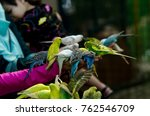 friendly budgerigar bird... | Shutterstock . vector #762546709